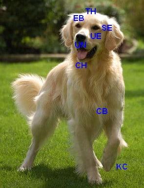 eftdog
