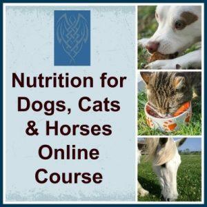 Nutritioncoursesmall