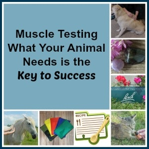 muscletestingconsultation
