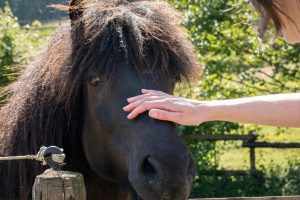 Animal Communication hand on ponies nose
