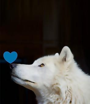 Wolf Retreat